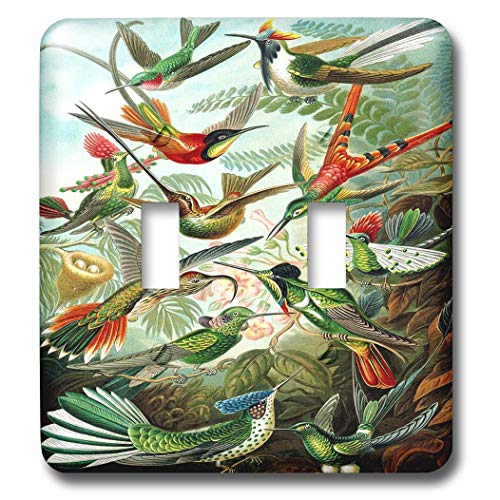 Famous Biologist Sketch of Hummingbirds