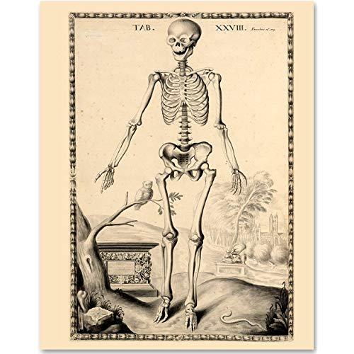 Skeleton Great Gift for Biologists