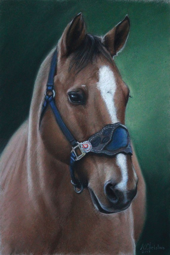 Gift Ideas for Horse Lovers and Equestrians Custom Horse Portrait