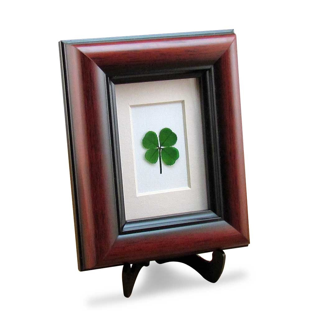 Preserved Four Leaf Clover great gift for anyone to wish them good luck before goodbye
